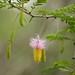 Flores exoticas da Suazilandia
