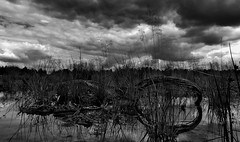 Memory of Passchendaele revisited (Vide Cor Meum Images) Tags: blackandwhite bw cloud reflection reflections mono fuji menacing demolition finepix torn fujifilm brooding tribute ww1 battlefield waste heavy cor worldwar corby desolation vide trenches stagnant broody warfare wasteground hs20 wartorn meum passchendaele markcoleman myfuji hs20exr mac010665yahoocouk videcormeumimages