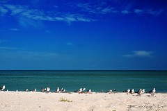 celestun 5146ch (Emilio Segura López) Tags: méxico mar playa arena yucatán celestun gaviota