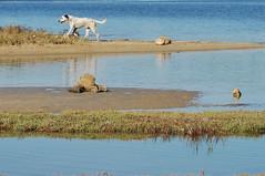 Striature blu - Blue streaks. (sinetempore) Tags: blue sea dog water grass cane reflex mare stones blu erba pietre acqua riflessi salento puglia mygearandme striatureblu blustreaks