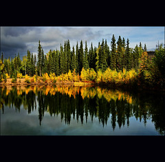 autumn flames (2) (klaus53) Tags: autumn trees lake nature colors alaska reflections landscape nikon natureza steesehwy flickrsfinestimages1 bewiahn