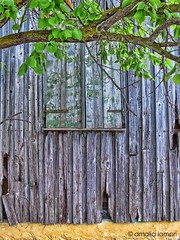 The hidden window (amalia lam) Tags: wood trees windows brown green window colors leaves yellow canon photography store europa europe branches gray images storage warehouse textures woodenhouse storehouse nationalgeographic storeroom repository