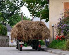 Dorfszene (Susanna Duchilio) Tags: dorf baden stroh anhänger wagen markgräflerland scherzingen