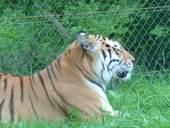 """Longleat Safari Park • <a style=""""font-size:0.8em;"""" href=""""http://www.flickr.com/photos/81195048@N05/8017669165/"""" target=""""_blank"""">View on Flickr</a>"""