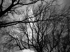 Triptych: The trees 3/3) (ale2000) Tags: lomo lomography film analog analogue up above lookingup tree trees branches naked winter inverno sky cielo olympus xa2 bw black white bianco nero biancoenero blackandwhite bleach bleached xperiment experiment chemical