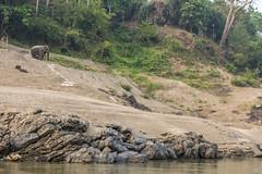 _RJS8189 (rjsnyc2) Tags: richardsilver richardsilverphoto richardsilverphotography nikon nikond810 d810 laos intrepidtravel asia mekong river mekongriver water travel travelphotographer travelphotography