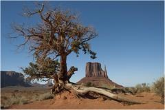 Monument Valley 0007 (Ezcurdia) Tags: monumentvalley utah arizona usa eeuu navajo tsebiindisgaii limolita navajotrivalpark johnfordpoint