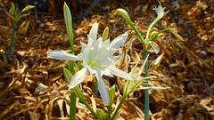 Plant (edlondon27) Tags: menorca balearics spain