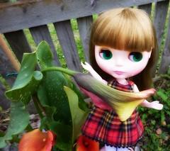 Annabelle Elise in Flower Forest (11/30--Garden) (Bebopgirl1969) Tags: blythe slownimes callalily garden flower