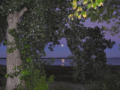 DSCN3788-3 (moon_hunter2014) Tags: moon luna tree trees sky rise moonrise lakechamplain plattsburgh water