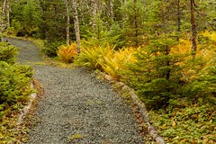 Autumn is Coming (Karen_Chappell) Tags: fall autumn ferns green orange path trail nfld newfoundland avalonpeninsula woods trees canada atlanticcanada landscape scenery scenic