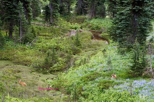 Mt. Rainier Summer 2012 23