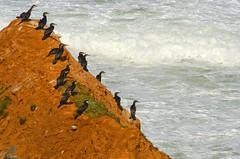Cormorans (Benoit Liard) Tags: ocean sea mer house beach colors island boat nikon scenery quebec ile qubec bateau paysage plage saintlaurent ilesdelamadeleine acadie d7000