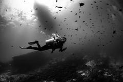 (green.pit) Tags: travel light blackandwhite bw fish monochrome boat blackwhite reisen nikon asia asien underwater sigma wideangle diving bn fisheye sw diver 28 fotografia dslr fx maldives schwarzweiss ff 15mm f28 2012 viajar d800 tauchen malediven unterwasser weitwinkel maldivas subacquea inon ariatoll submarina bucear ellaidhoo vollformat z240 nikond800 chaayareefellaidhoo nauticam pitgreenwood nad800