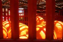 Oranges in Jaiil