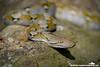 Reticulated Python (Python reticulatus) - Tanjong Jara, Malaysia-7 (Christian Loader Photography) Tags: reptile snake malaysia python reticulated tanjongjara tanjungjara christianloader scubazooimages