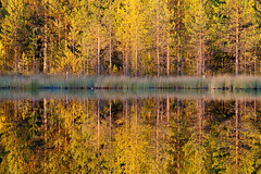 Trees Reflection (palnick) Tags: lake tree yellow alberi forest reflections finland lago tramonto lakes giallo forests refelction finlandia riflesso foresta kumho laghi