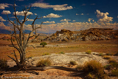 Middle of nowhere (Dave Arnold Photo) Tags: usa cloud mountain tree rock utah us nationalpark ut sand desert image arnold picture pic deadtree serene np capitolreef torrey capitolreefnationalpark davearnold davearnoldphotocom mygearandme