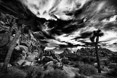 Joshua Tree #2 (TroyMasonPhotography) Tags: california sunset vacation blackandwhite blur rock clouds landscape nationalpark desert wine fineart joshuatree yuccavalley dinnerdate ca62 troymason twentyninepalmshighway troymasonphotographycom bhaktifest