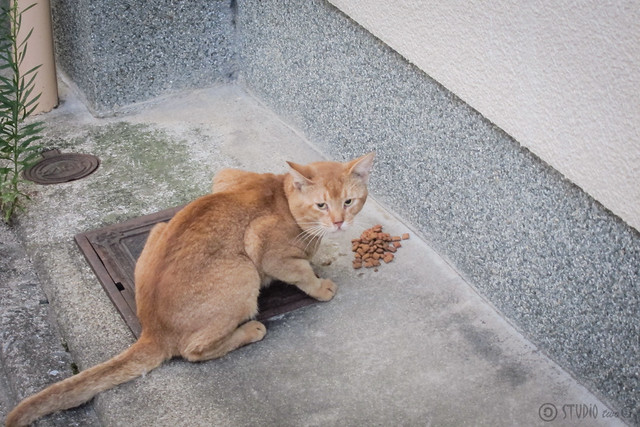 Today's Cat@2012-09-14