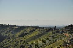 paesaggi tra Langhe e Monferrato (g.fulvia) Tags: italia piemonte colline langhe pavese filari eyegrabber sstefanobelbo fleursetpaysages
