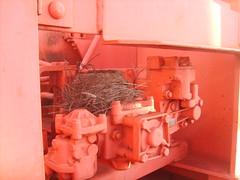 birds nest on pink train (TheRapLetterTechnician) Tags: railroad pink bird birds train graffiti virginia dc md nest streak ns norfolk maryland rail trains southern va rails streaks dmv hobo freight birdsnest freights moniker