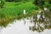 Nicas (mrzbrt) Tags: nature central natura americaamerica nicaraguaviaggicoloricolourstravellinglos guatusosanimalianimalswildlifeamerica latinacentral