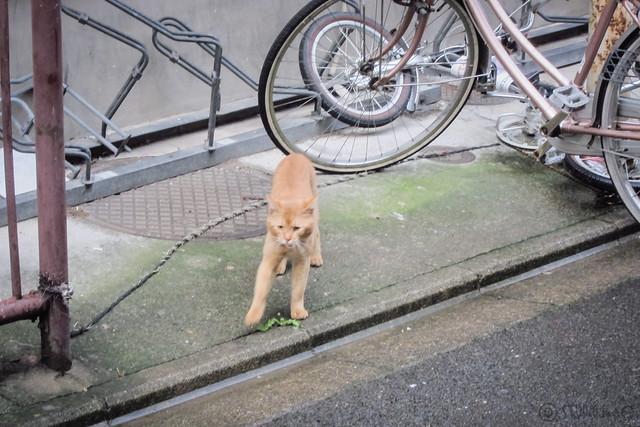 Today's Cat@2012-09-18