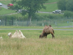 """Longleat Safari Park • <a style=""""font-size:0.8em;"""" href=""""http://www.flickr.com/photos/81195048@N05/8017699577/"""" target=""""_blank"""">View on Flickr</a>"""