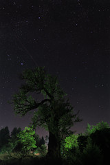 Night life of plants [explored 23-9-2012] (ChrisBrn) Tags: plants tree silhouette backlight night stars nightsky starrysky Astrometrydotnet:status=failed Astrometrydotnet:id=alpha20120966221888
