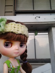 Jilly hunts for Monarchs