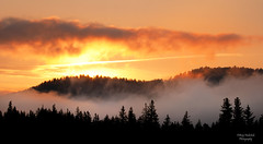 Sunrise In Grand Teton National Park (Amy Hudechek Photography) Tags: morning trees orange fog forest sunrise nikon getty gettyimages grandtetonnationalpark d300 gtnp happyphotographer mygearandme mygearandmepremium mygearandmebronze mygearandmesilver mygearandmegold mygearandmeplatinum mygearandmediamond