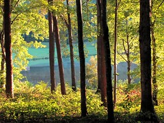 The Pond (David Hoffman '41) Tags: trees shadow summer sunlight nature leaves rural landscape evening virginia pond scenery farm country peaceful foliage trunk soe meditative bole charlottecourthouse charlottecounty greenscene platinumheartaward