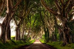 The Dark Hedges (Fat_Fingers) Tags: road ireland forest dark hedges the bregagh