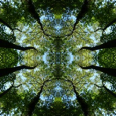 looking up at the leaf canopy (amazingstoker) Tags: sky abstract tree green up circle square canal leaf looking kaleidoscope hampshire lane hatch canopy basingstoke spratts dogmersfield