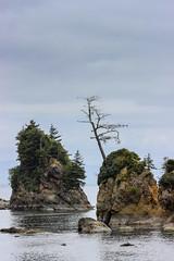 Rugged Coast (Valentina Sokolskaya) Tags: oregon usa or coast tillamookbay tillamook bay rock tree