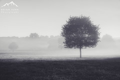 The Lollipop (.Brian Kerr Photography.) Tags: lazonby cumbria rivereden briankerrphotography mistymorning sunrise tree mist sonyuk photography a7rii light availablelight