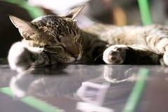 DSC06309 (C*A(t)) Tags: cat straycat street nightmarcat