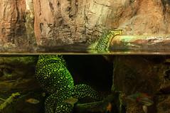 Acuario Agosto 2016 (76) (Fernando Soguero) Tags: acuario zaragoza acuariodezaragoza aragn turismo aquarium nikon d5000 fsoguero fernandosoguero