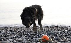 (orbit9000) Tags: aberystwyth wales dog hund