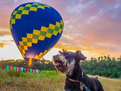 P8203261 (aroundthesky) Tags:   hotairballoon