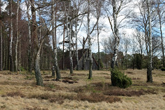 Stable (danieloss86) Tags: stable stall heide heath lneburg lneburgerheide nature natur birch forest wald birke