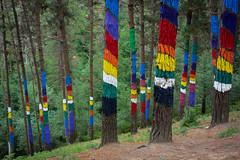 Bosque de Oma (Juan Ig. Llana) Tags: pasvasco bizkaia oma bosque pintado rboles pinos agustnibarrola zb