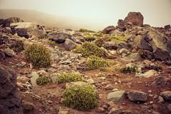 the last green (iSteven-ch) Tags: stratovolcano ecuador plant travel eos6d 6263m southamerica chimborazo rocks canon mountain stones clouds ec