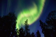 Over The Trees (Lee Petersen) Tags: alaska aurora auroraborealis fairbanks forest night nightsky northernlights silhouette sky stars trees twilight
