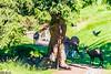 DSC_9520 (Costi Jacky) Tags: france naturereserve parcdemerlet