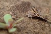 DSCF0338 (faki_) Tags: fuji fujifilm xe1 fujinonxf60mmf24rmacro 60 24 rovar insect lepke butterfly