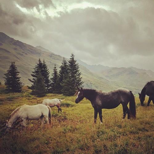 #magicswitzerland #visiswitzerland #lovemyjob #earlybird #ontheroad #birdviewpicture #makanart #lovenature #meditation #horses #wild #swissalps #mountains