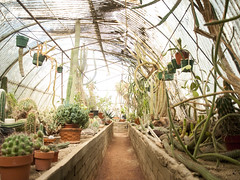 (gwoolston) Tags: socal california palmsprings garden cactus desert green succulent plant greenhouse tree