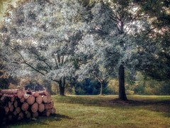 End of Summer (DaraDPhotography) Tags: trees summer nature rural woods logs textures demetrius textured redmood awardtree flypapertextures distressedjewelltextures wwwdaradphotographycom augustpainterly distressedpurepainterly